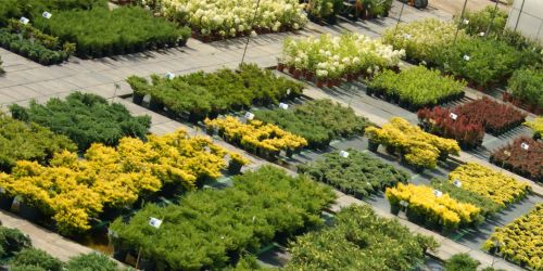 Производство декоративных растений